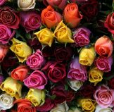 Самая низкая цена на розы