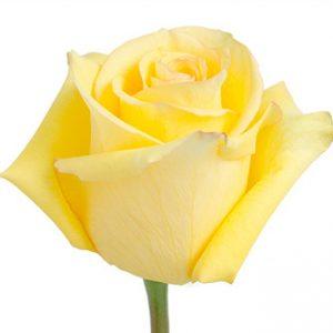 Розы сорта Deja Vu оптом из Эквадора