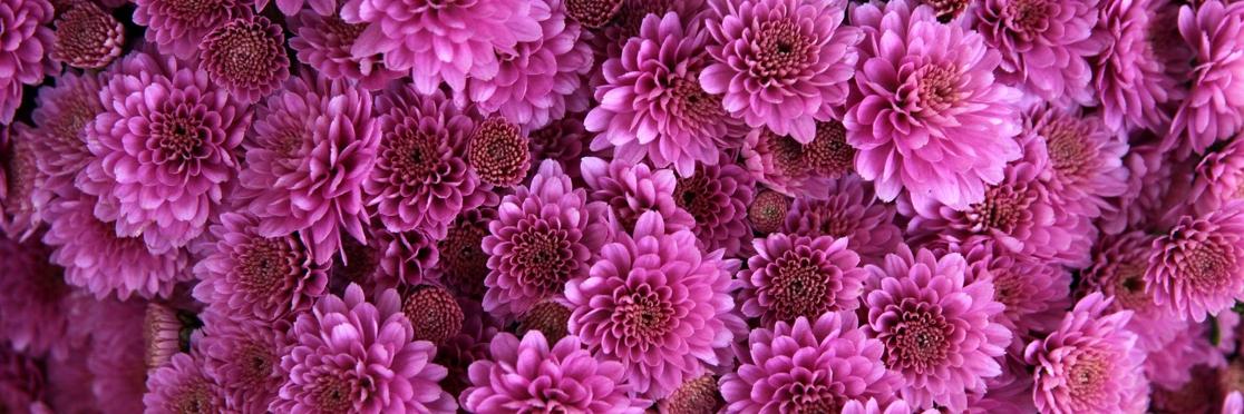 storeflowers008