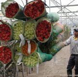 Продажи цветов в Эквадоре упали на 70 %